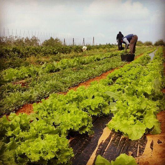 Las FAQ sobre los productos ecológicos