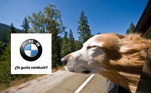 """""""Te gusta conducir"""". BMW satisface el placer de conducir a través de sus coches."""
